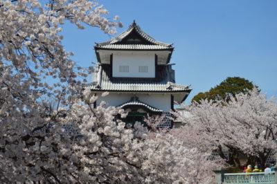 Kanazawa Ishikawamon cherryblossms